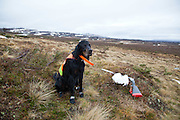 Grouse hunting dogs, Norway.