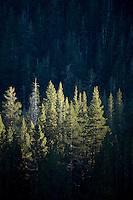 Scenic image of evergreen trees.