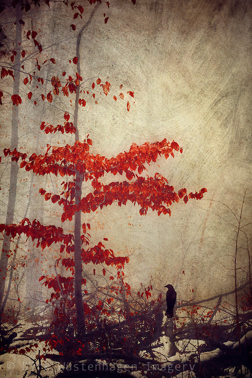 small tree with vivid red leaves on a misty winter day - textured photograph<br />
