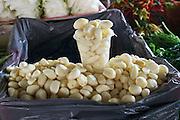 Uzbekistan, Tashkent. Chorsu Bazaar. Garlic.