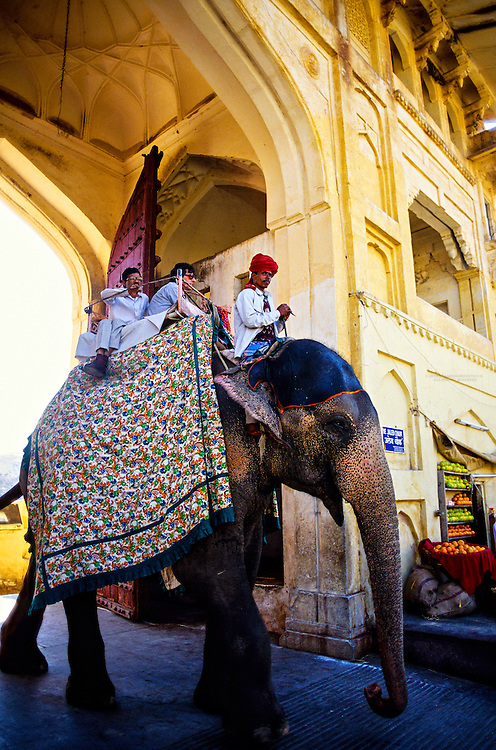Elephant entering the Amber Palace and Fort, near Jaipur, Rajasthan, India