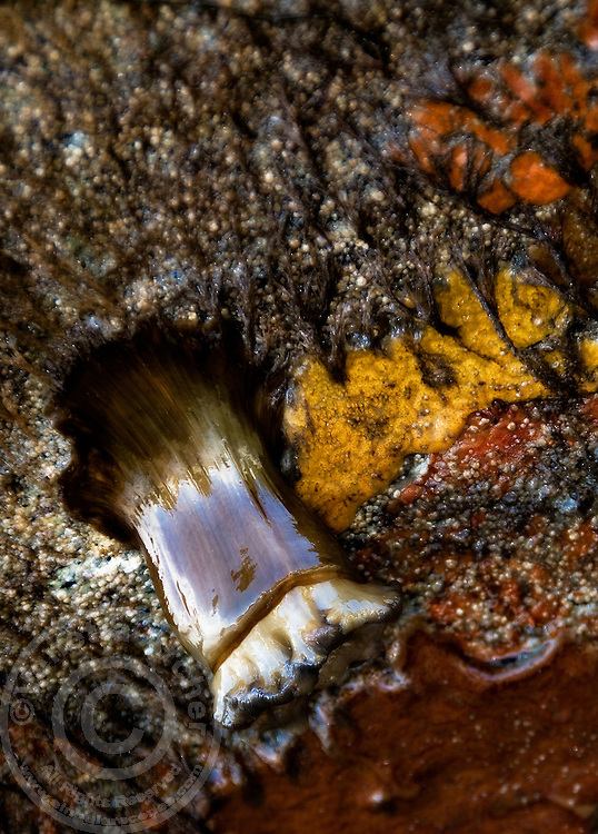 Unidentified but fascinating tidal pool creature