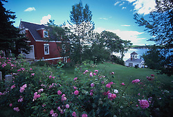 Pink flowers and Rogers Garage and Boathouse, Castine, Maine, US