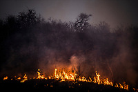 Bushveld fire and flames, Pilanesberg National Park, North West, South Africa