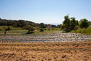 Organic crops during an open day at Can Tria de Mata, near Mataro, Barcelona, Catalonia. (c) Dave Walsh 2017