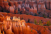 The cloud-filtered rays of the rising sun strike and reflect off of the hoodoos in Bryce Canyon, lending a surreal light to the formations.