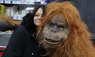 Iceland | Orangutan Birmingham