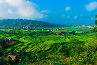 Lush, terraced farmland, Sudal, Kathmandu Valley, Nepal.