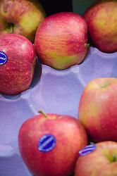 Apples arranged on cardboard trays