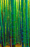 Bamboo forest near Nara, Japan