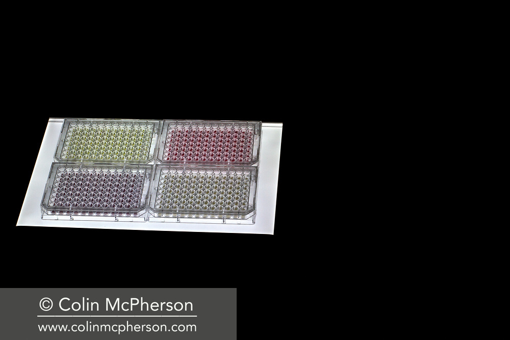 Word: EXPERIMENT<br /> <br /> Caption: A 96-well microtiter plate containing mustard, lipstick, red wine and grass stained fabric.<br /> <br />  The image is taken from a project entitled 'The Proof Principle' by photographer Colin McPherson, which was commissioned in 2011 by Unilever to celebrate 100 years of work at the company's research and development facility at Port Sunlight, Wirral.<br /> <br /> All images © Colin McPherson, all rights reserved.