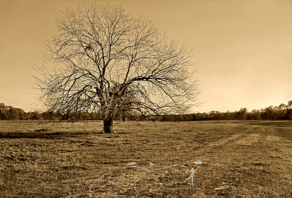 The sun sets behind a barren, lone tree in Thomaston, Alabama, March 17, 2007. (Photo by Carmen K. Sisson/Cloudybright)