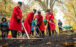 © Licensed to London News Pictures. 07/11/2018. London, UK. Four Chelsea Pensioners join schoolchildren in Brompton Cemetery as they begin the creation of a permanent wildflower meadow at the site of the Chelsea Pensioners' monument, as a tribute to the 2,625 Pensioners buried there. Photo credit: Rob Pinney/LNP