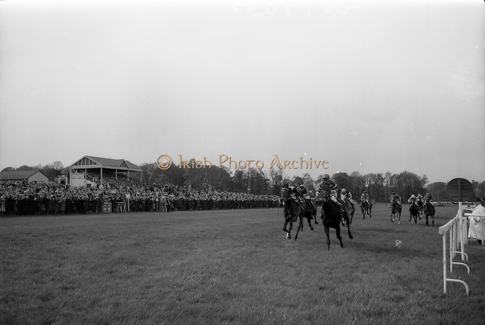 "08/05/1965<br /> 05/08/1965<br /> 08 May 1965<br /> The 1965 Gold Flake Meeting at Leopardstown Racecourse, Co. Dublin. Image shows Mr Raymond R. Guest's ""Rigi"" (J.M. Purtell up) winning the Three Castle Stakes race from ""Islette"" (P. Boothman up) and ""Twelve Oaks"" (J. Hunter up)."