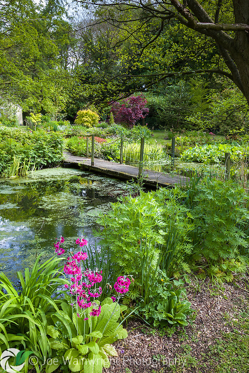 Stonyford Cottage Gardens, near Northwich in Cheshire, is an oasis of tranquility and has been listed as one of the top 10 UK spring gardens, by the Daily Telegraph.  Here it is photographed in May.