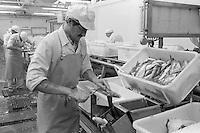 Fish Filleter, Bluecrest Foods, Grimsby.