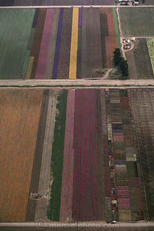 Aerial photograph of fields of flowers grown for seed in Lompoc, California. Today, some of the fields in Lompoc have been converted to wine grape production.