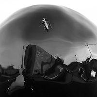 http://Duncan.co/praying-mantis-on-sphere