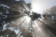 Piranga_MG, Brasil...Raios do sol entre as árvores em Piranga, Minas Gerais...Sun rays between the trees Piranga, Minas Gerais...Foto: LEO DRUMOND / NITRO