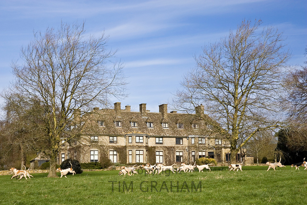 Pack of hounds, part of  Heythrop Hunt, run on Swinbrook House Estate, Oxfordshire, United Kingdom