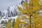 Larches near Chester Lake, Peter Loughheed Provincial Park, Kananaskis Country, Alberta