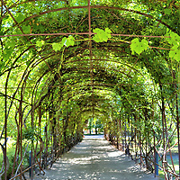 Garden Trellis at Concha y Toro Vineyard in Pirque, Chile<br /> An enjoyable half-day excursion from Santiago is to visit the Vi&ntilde;a Concha y Toro vineyard. Your guided tour begins by passing beneath this trellis in a magnificent garden. Next you will see the founder&rsquo;s 19th century summer residence, learn about the different varieties of grapes, walk along the scenic original vineyard and explore the legendary cellar. Your final reward is the wine tasting.  Superb! It is a terrific experience regardless if you are a sommelier or a vino neophyte.