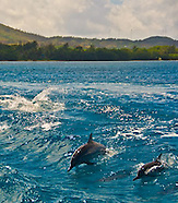 Guam Dolphins