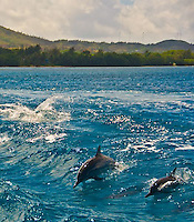 Guam Spinner Dolphins in Agat Bay