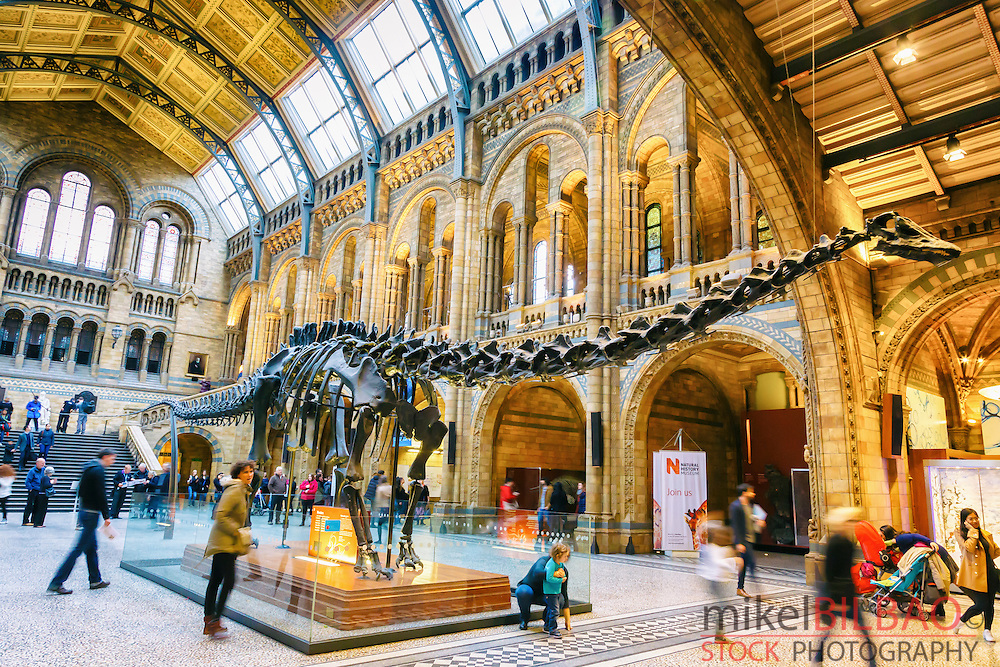 Natural History Museum. London, England, United kingdom, Europe.