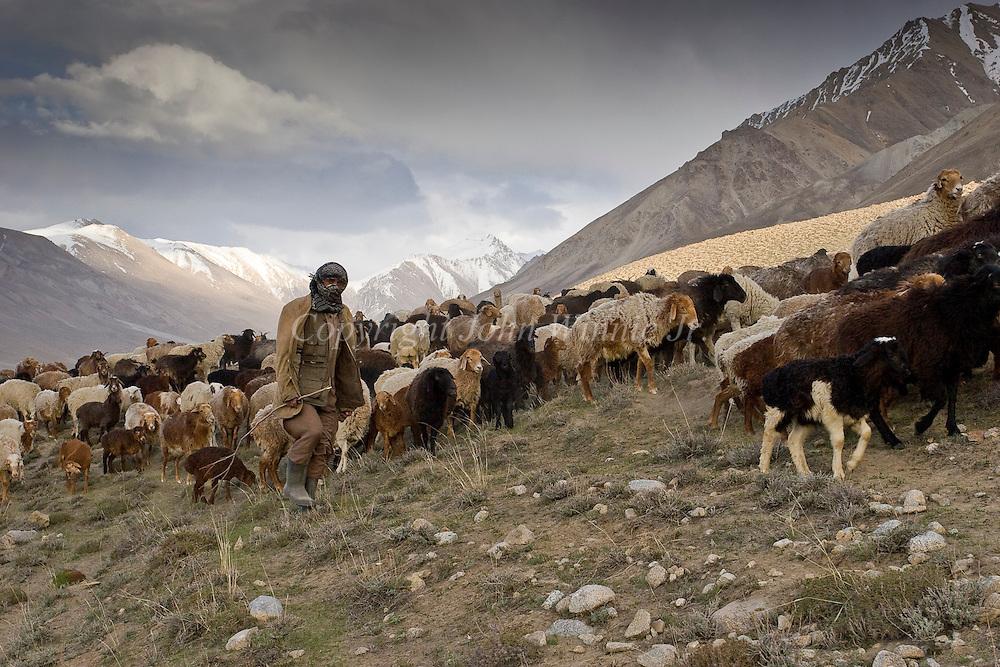 Sheep herder with flock. Big Pamir, Afghanistan.