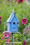 01324-01411 House Wren (Troglodytes aedon) at blue nest box near Hollyhocks (Alcea rosea) Marion Co. ,  IL