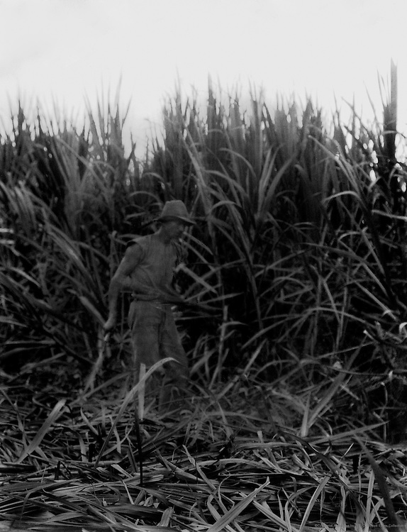 Harvesting Sugar Cane, Cairns, Queensland, Australia, 1930