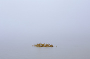seagulls flock together on an little rock