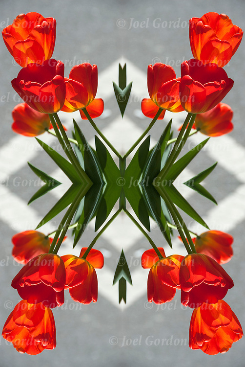 Photographic series of tulip Digital Computer Art.<br /> <br /> Two or more layers or generations  used to enhance, alter and manipulate the image, creating an abstract surrealistic mirrored symmetry.