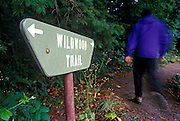 Image of a nature trail in Forest Park, Portland, Oregon, Pacific Northwest