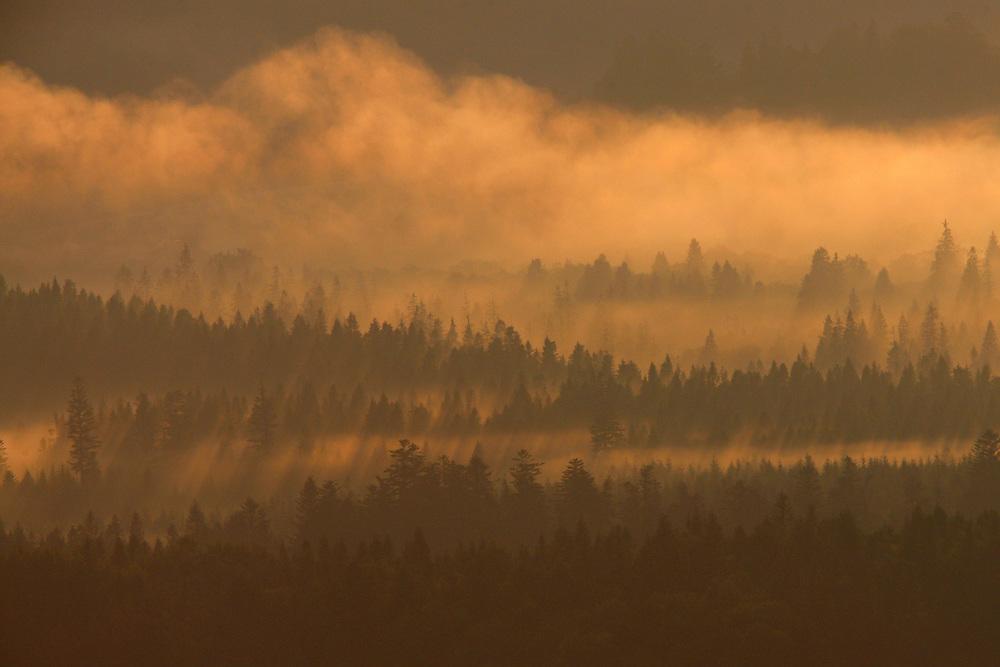 Dawn at Bieszczady National Park, Poland