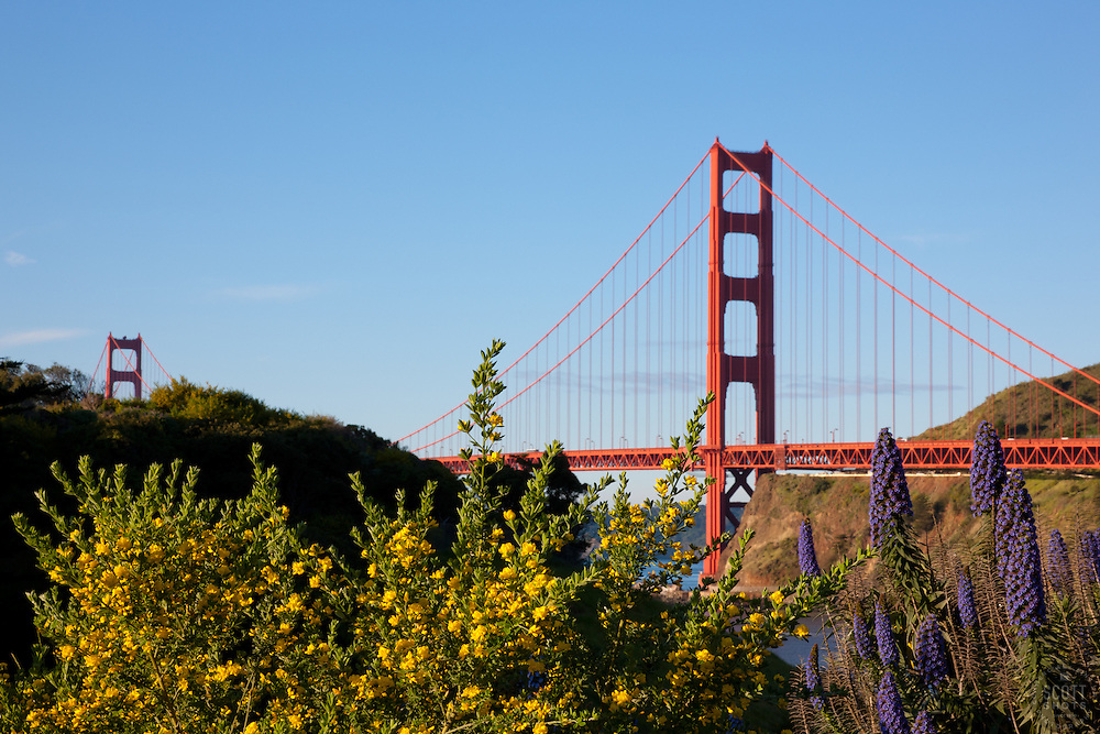 """Flowers at the Golden Gate Bridge"" - These flowers were photographed in the early morning with San Francisco's famous Golden Gate Bridge in the background."