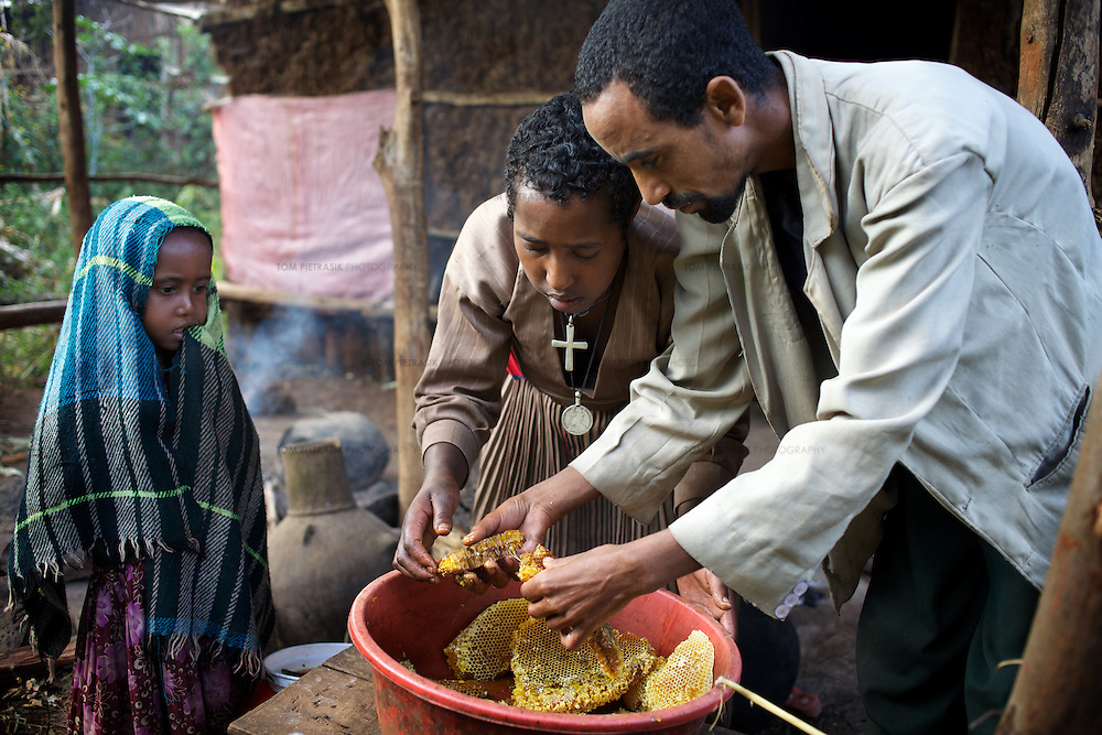 While their daughter Rekebki looks on, Wubalem and her husband Tsega clean the honey and wax harvested from a traditional hive. This is a much more labourious task than processing the honey from modern hives. <br /> <br /> Wubalem Shiferaw, age 23, lives in the village of Mecha with her husband Tsega Bekele, age 33, and their daughter Rekebki, age 4. Wubalem remembers her grandparents harvesting honey. She has maintained this tradition while moving to modern hives which produce a far greater yield of honey. Wubalem is a member of the Mecha village Cooperative which brings together local women beekeepers allowing them to share insights and build a credit union. The Mecha village Cooperative is not yet a member of the Zembaba Union. Wubalem's husband Tsega is a priest and a tailor. <br /> <br /> Harvesting honey supplements the income of small farmers in the Ethiopian region of Amhara where there is a long tradition of honey production. However, without the resources to properly invest in production and the continued use of of traditional, low-yielding hives, farmers have not been able to reap proper reward for their labour. <br /> <br /> The formation of the Zembaba Bee Products Development and Marketing Cooperative Union is an attempt to realize the potential of honey production in Amhara and ensure that the benefits reach small producers. <br /> <br /> By providing modern, high-yield hives, protective equipment and training to beekeepers, the Cooperative Union helps increase production and secure a steady supply of honey for which there is growing demand both in and beyond Ethiopia. The collective processing, marketing and distribution of Zembaba's &quot;Amar&quot; honey means that profits stay within the cooperative network of 3,500 beekeepers rather than being passed onto brokers and agents. The Union has signed an agreement with the multinational Ambrosia group to supply honey to the export market. <br /> <br /> Zembaba Bee Products Development and Marketing Coo
