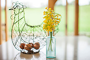 Eggs in wire hen ornament and vase of wild Cowslips, Primula veris, in springtime in the Cotswolds, Oxfordshire, UK