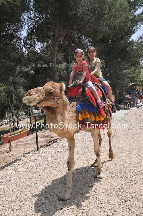 Two girls enjoy a camel ride, Negev, Israel