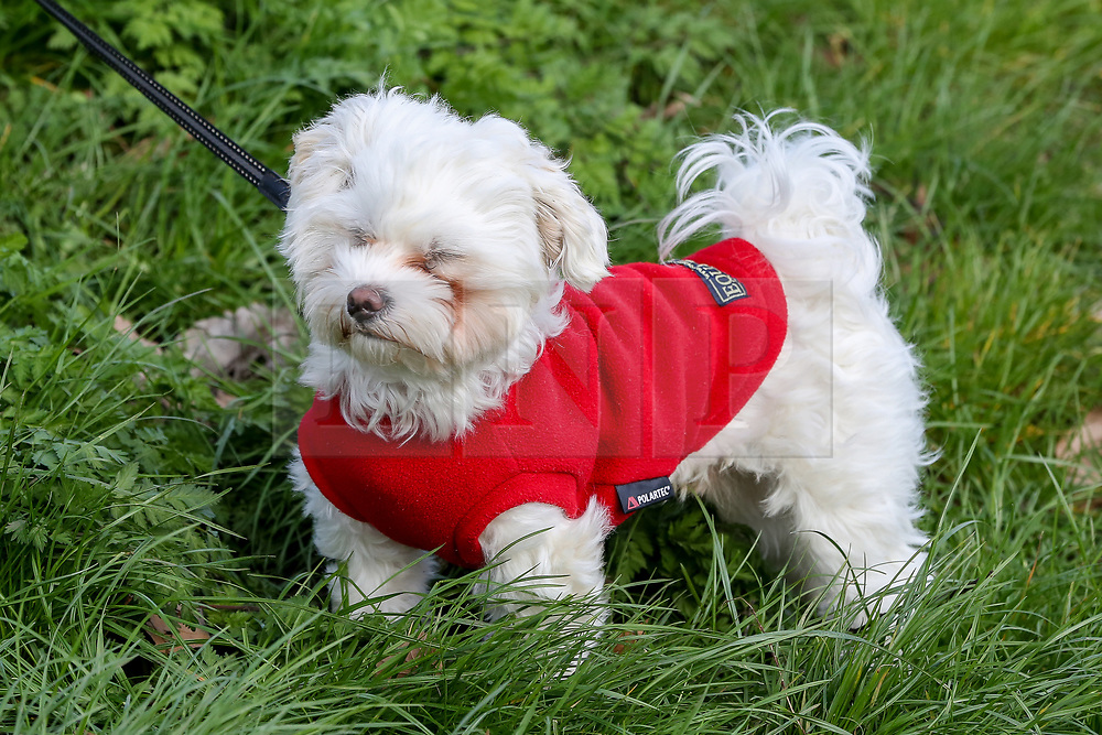 © Licensed to London News Pictures. 15/03/2019. London, UK. A dog in Finsbury Park, north London struggles to keep the eyes open during strong winds. Photo credit: Dinendra Haria/LNP