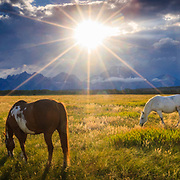 Horses graze as a summer thunderstorm begins to clear at sunset in Grand Teton National Park, Wyoming.