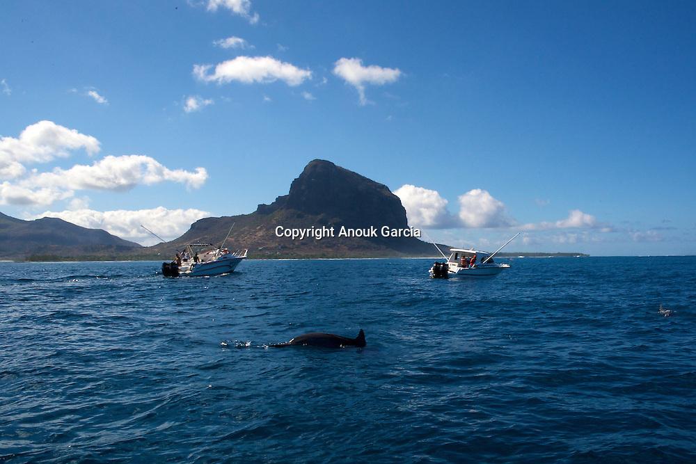 Meet with the dolphins blowers   Rencontre avec les dauphins souffleurs