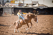 November 2, 2008 -- PHOENIX, AZ: Bareback riding at the Arizona High School Rodeo at the Arizona State Fair in Phoenix. Teams from across the state participate. The Arizona High School Rodeo Association sponsors a full season of high school rodeo that culminate in a championship rodeo in June.  Photo by Jack Kurtz / ZUMA Press