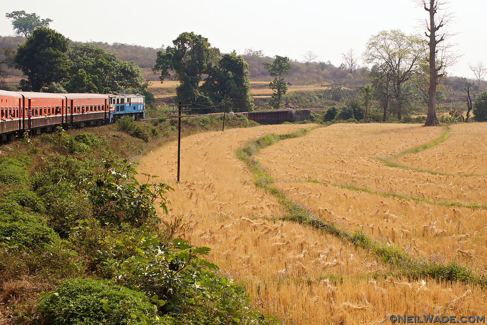 A train passes fields of wheat in Myanmar (Burma).