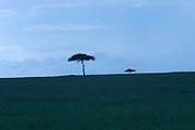 Kenya, Masai Mara, Dawn at David Livingstone Safari Resort, lone tree