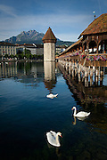The Chapel Bridge with swans and Mount Pilatus, Lucerne, Switzerland.