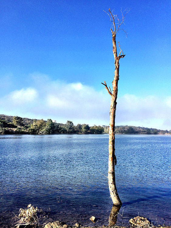 A lone tree in a lake