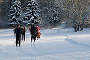 Skilangläufer, Langlauf Loipe in Braunlage, Schnee, Winter, Harz, Niedersachsen, Deutschland | cross country ski track in Braunlage, forest, snow, winter, Harz, Lower Saxony, Germany