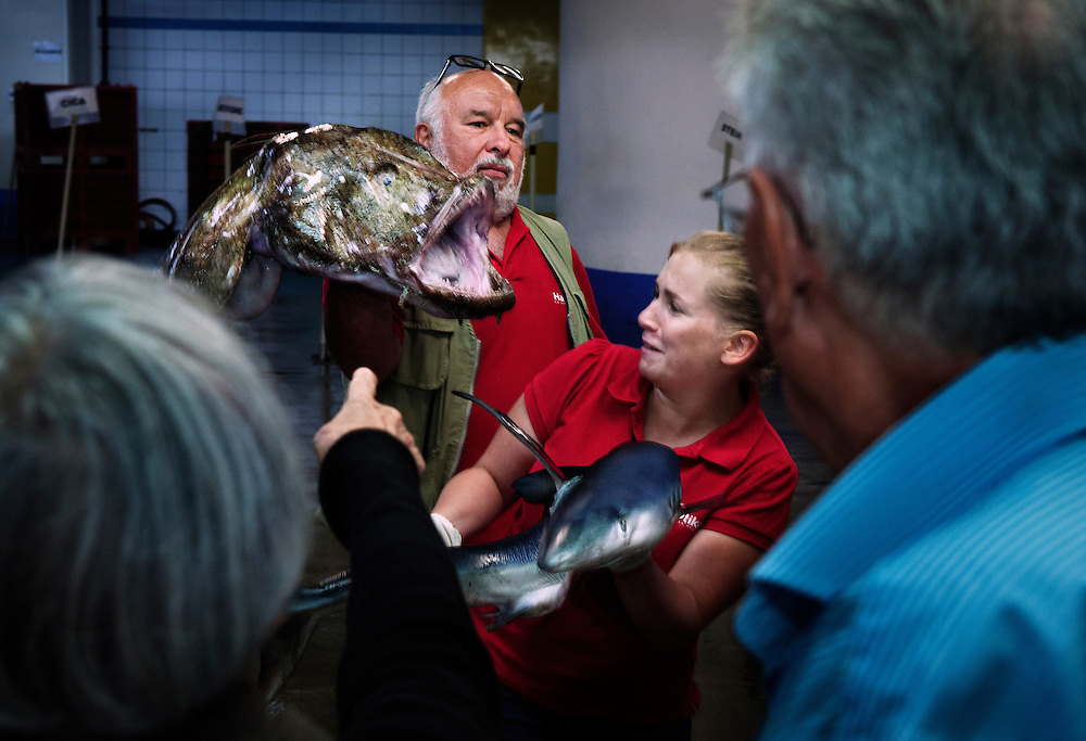 A presentation of different species of fish, for tourists, held by the staff of the 'Haliotika' centre, in the Fish Auction, Le Guilvinec, France.<br /> <br /> In the summer months these are held several times a day.
